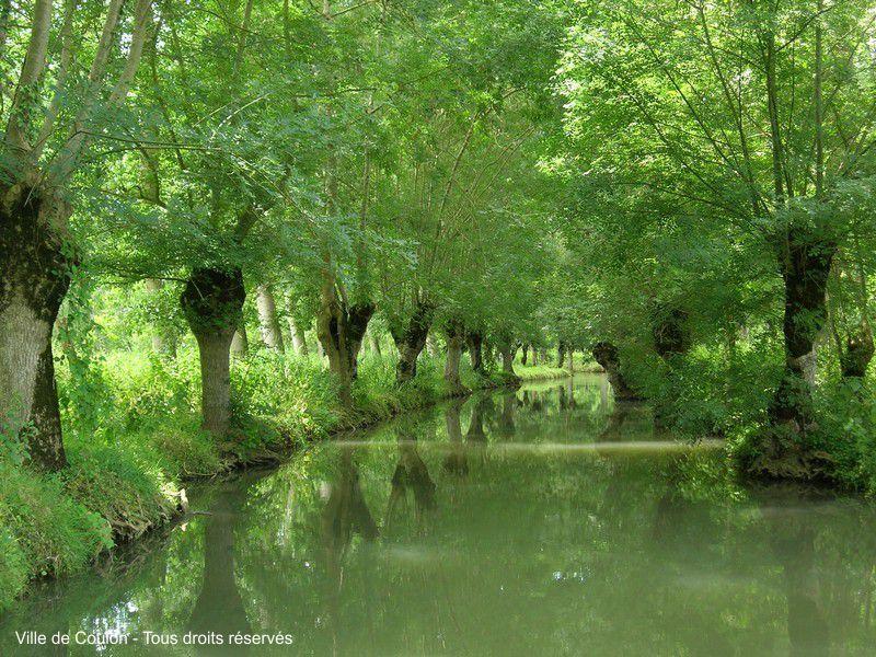 Dans le marais poitevin les paysages les canaux